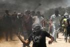 اعتقالات وإصابات خلال مواجهاتٍ عنيفةٍ مع المستوطنين في الخليل
