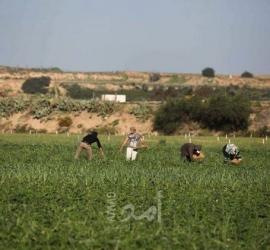 زراعة حماس: خسائر القطاع الزراعي خلال الموجة الحارة بلغت 270 ألف دولار