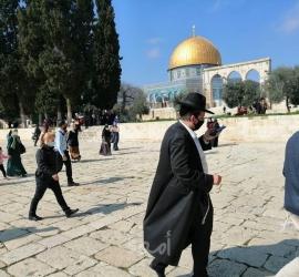 """القدس: (211) مستوطن يقتحمون ساحات """"الأقصى"""" بحراسةٍ مشددة"""