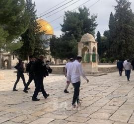 """القدس: (437) مستوطناً اقتحموا """"الأقصى"""" خلال الأسبوع الماضي"""