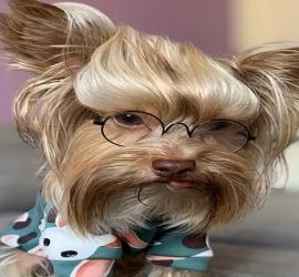 كلب يتحول لنجم بالسوشيال ميديا -- شاهد