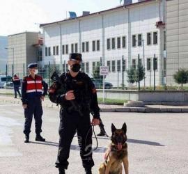 مقتل (7) أفراد من عائلة كردية واحدة برصاص مسلحين في تركيا