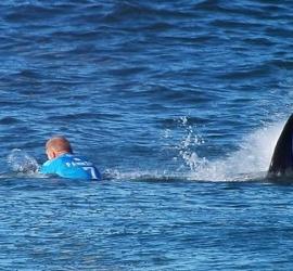 هجوم سمكة قرش ضخمة على راكب أمواج - شاهد