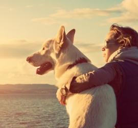 كلب يتتبع سارقا إلى منزله ويكشف عنه ويحظى بمكافأة