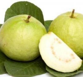 7 فوائد لمستخلص ورق الجوافة