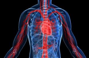أهمية البروتين والكربوهيدرات لجسم الإنسان؟ تعرف