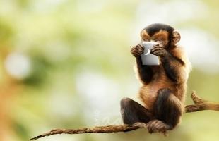 شمبانزي يتصفح هاتفا ذكيا