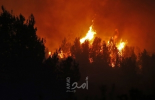 اندلاع حريق ضخم في منطقة غور الأردن