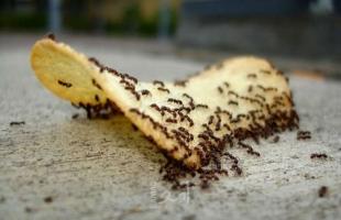 حيلة سريعه تخلصك من النمل فورا