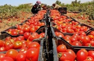 زراعة حماس تُوضح سبب ارتفاع أسعار البندورة والخيار