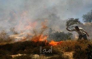 حرائق متفرقة تلتهم 210 شجرة زيتون ولوزيات في جنين