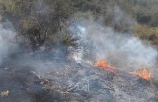 جنين: جيش الاحتلال يتسبب باحتراق 120 شجرة زيتون