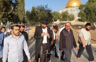 (100) مستوطن وطالب يهودي يقتحمون ساحات الأقصى بحراسةٍ مشددة