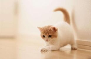 قطة تتسبب باختناق أكثر من 60 طالبة في إحدى المدارس المصرية