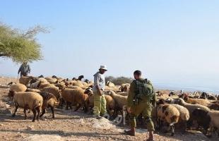 قوات الاحتلال تلاحق رعاة الأغنام في الأغوار الشمالية