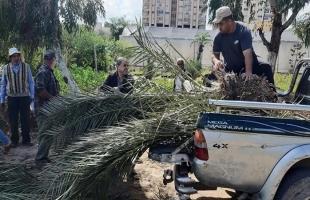 زراعة غزة وجمعية الرحمة تواصلان توزع أشجار نخيل على المزارعين