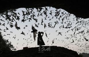 كاتبة صينية تكشف لماذا يأكل شعبها الخفافيش والحيوانات الأخرى