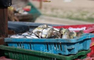 شرطة حماس البحرية تضبط كميات كبيرة من السمك الفاسد بغزة