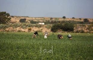 إصابة عدد من المزارعين اختناقاً جراء استهدافهم بقنابل الغاز شرق خانيونس