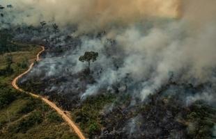 بالفيديو.. علماء يحذرون من تدهور دور الغابات في الحد من انبعاثات الكربون