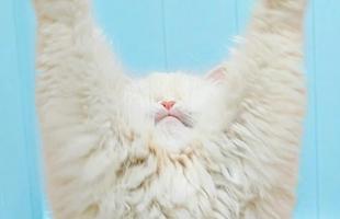 بالفيديو .. قطة عمياء تتحول إلى نجمة بمواقع التواصل الاجتماعي