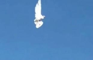 طائر يتجمد أثناء تحليقه في السماء .. فيديو