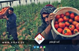 زراعة غزة: تدخلاتنا بالتصدير محدودة واتهامات المزارعين تجني علينا