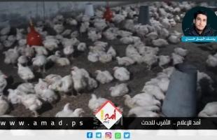 شاهد- تحقيق استقصائي:  غزة تأكل الدجاج الفاسد!