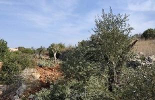 """قوات الاحتلال تقتحم سلفيت ومستوطنون يقتلعون أشجار زيتون في """"بروقين"""""""