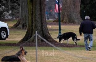 كلبا جو وجيل بايدن دخلا البيت الأبيض