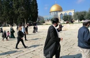 """القدس: (98) مستوطناً يقتحمون المسجد """"الأقصى"""""""