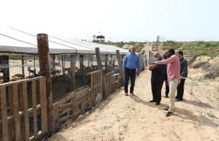 بلدية غزة تجمع نحو (60) من الكلاب السائبة شهريًا