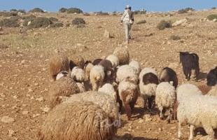 الخليل: مستوطنون يحاولون السيطرة على كهف ويرعون أغنامهم بأراضٍي المواطنين