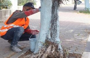 بلدية غزة تبدأ بتنفيذ مشروع لزيادة المساحات الخضراء وتقليم الأشجار