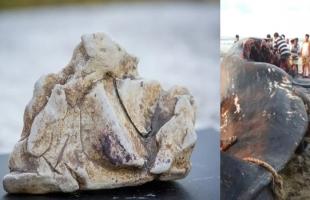 صيادون يعثرون على كنز بملايين الدولارات داخل بطن حوت