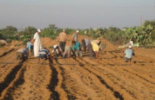 غزة: الإغاثة الزراعية ترصد أضرار المزارعين جراء فتح السدود من الجانب الإسرائيلي