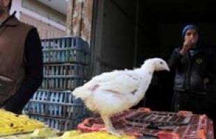أسعار الدجاج في أسواق غزة
