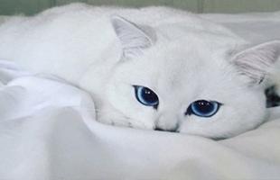 سيدة تطلب الطلاق بسبب قطة.. تفاصيل