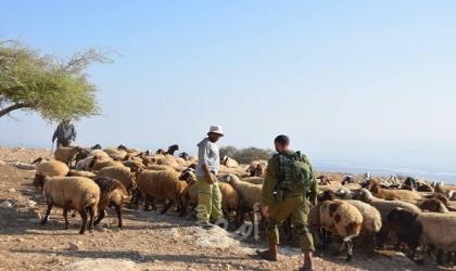 مستوطنون يحتجزون راعي أغنام وشقيقته شرق بيت لحم