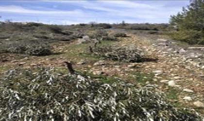 """""""العمل الزراعي"""" يرصد اقتلاع أكثر من 15 ألف شجرة خلال شهر يناير"""