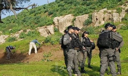 نابلس: مستوطنون يقتلعون أشتال زيتون في عصيرة الشمالية