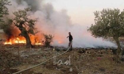 مستوطنون يحرقون مئات أشجار الزيتون بمسافر يطا جنوب الخليل