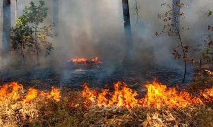 نابلس: مستوطنون يحرقون مساحات زراعية واسعة