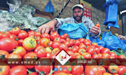 الزراعة تدحض ادعاءات سلطات الاحتلال واشتراطاته لتسويق بندورة غزة