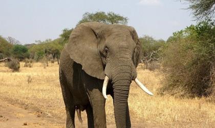 لأول مرة في تاريخ محاكم أمريكا.. رفع قضية نيابة عن فيل