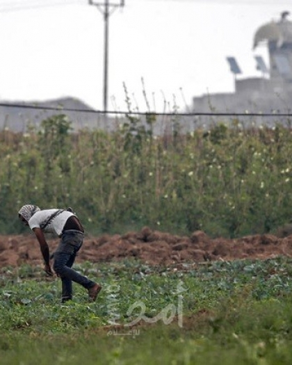 قوات الاحتلال تُطلق النار تجاه المزارعين جنوب قطاع غزة