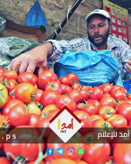 """سلطات الاحتلال تسمح بتصدير """"البندورة"""" بالقمعة من قطاع غزة"""